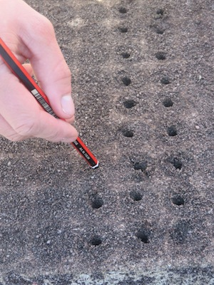 preparing the holes for sowing seed