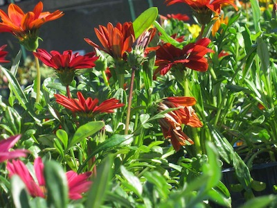 Drought tolerant plants making the most of autumn