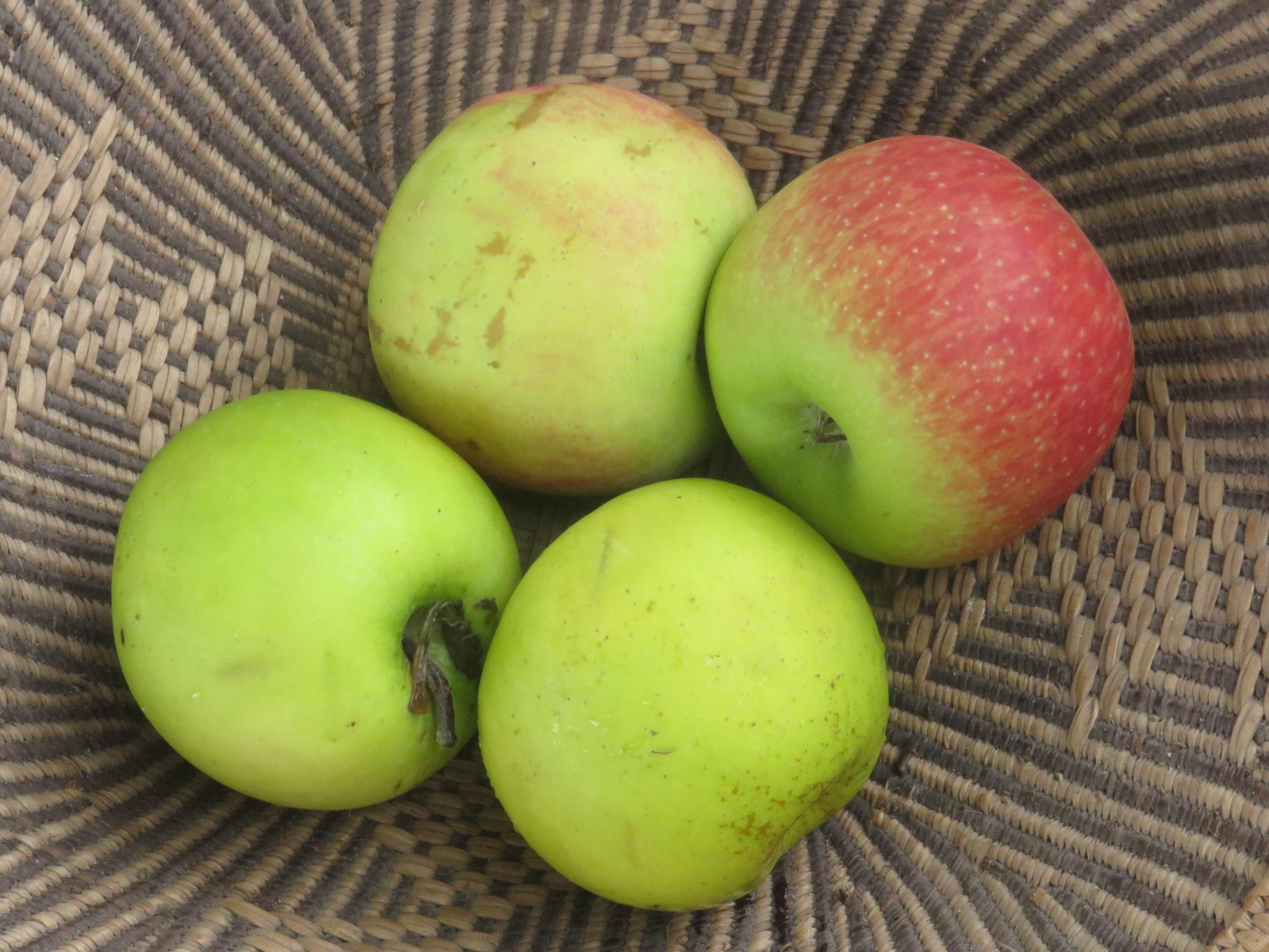 pectin rich fruit