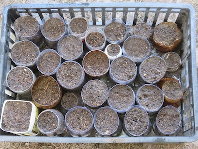 when the tubes are full sow with seed or plant up with seedlings