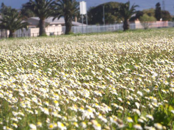no fertilizers required