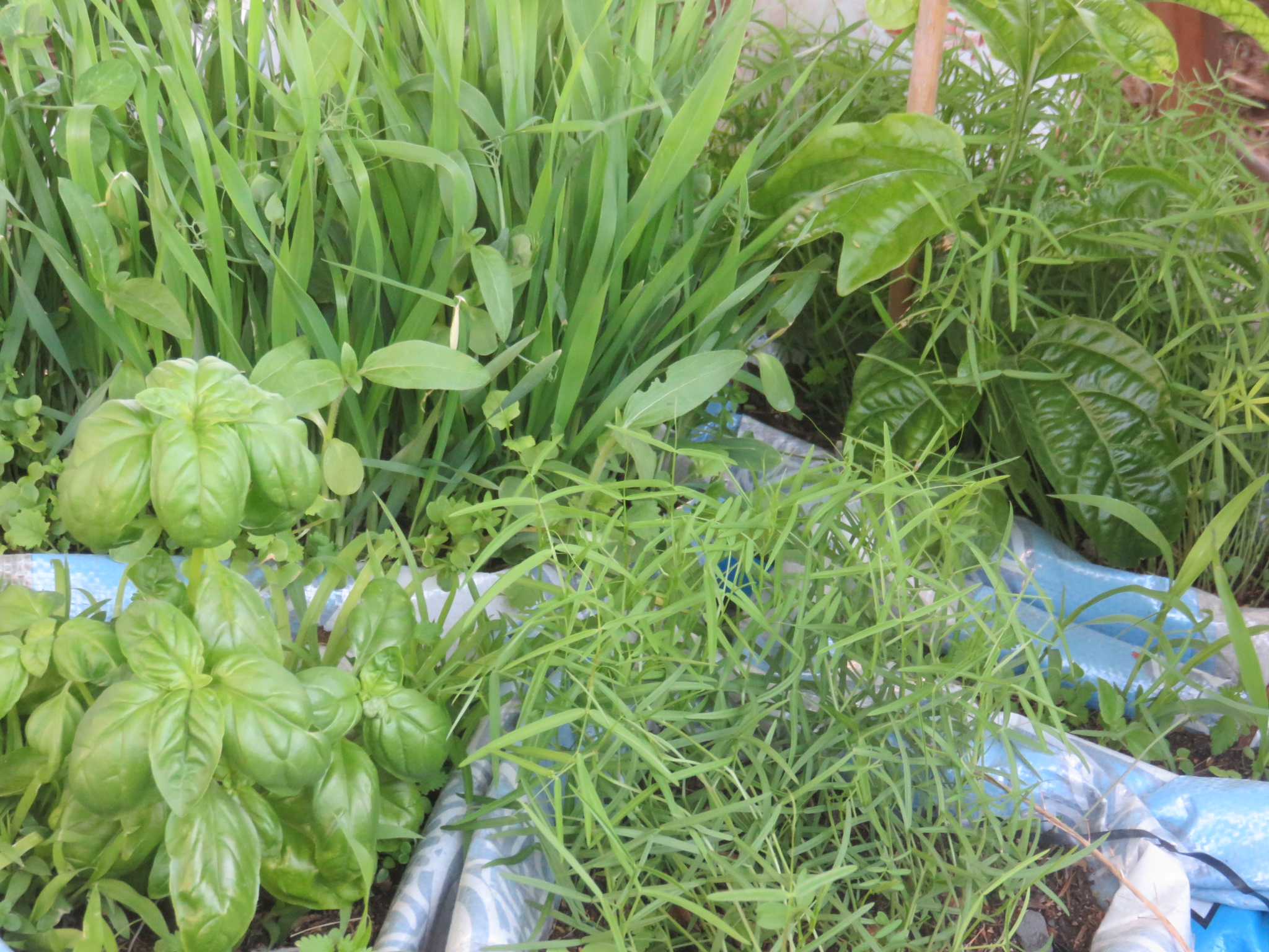 cover crops, herbs and fruit in the wetland