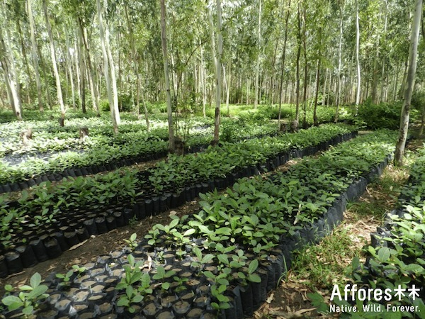 saplings waiting to become forests in filtered shade