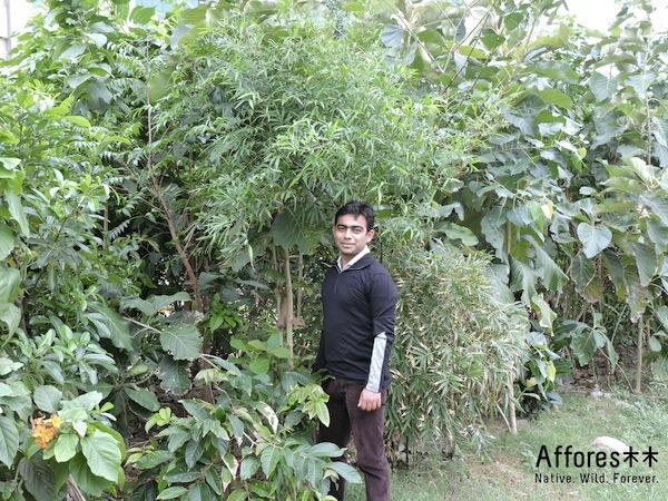 Shubhendu Sharma with his living green afforestation machines