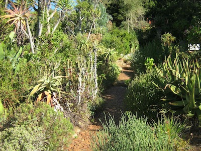 a grand scale grouping for water requirements, the succulent garden at Kirstenbosch sits on an artificial drainage bed of rock, stone and gravel