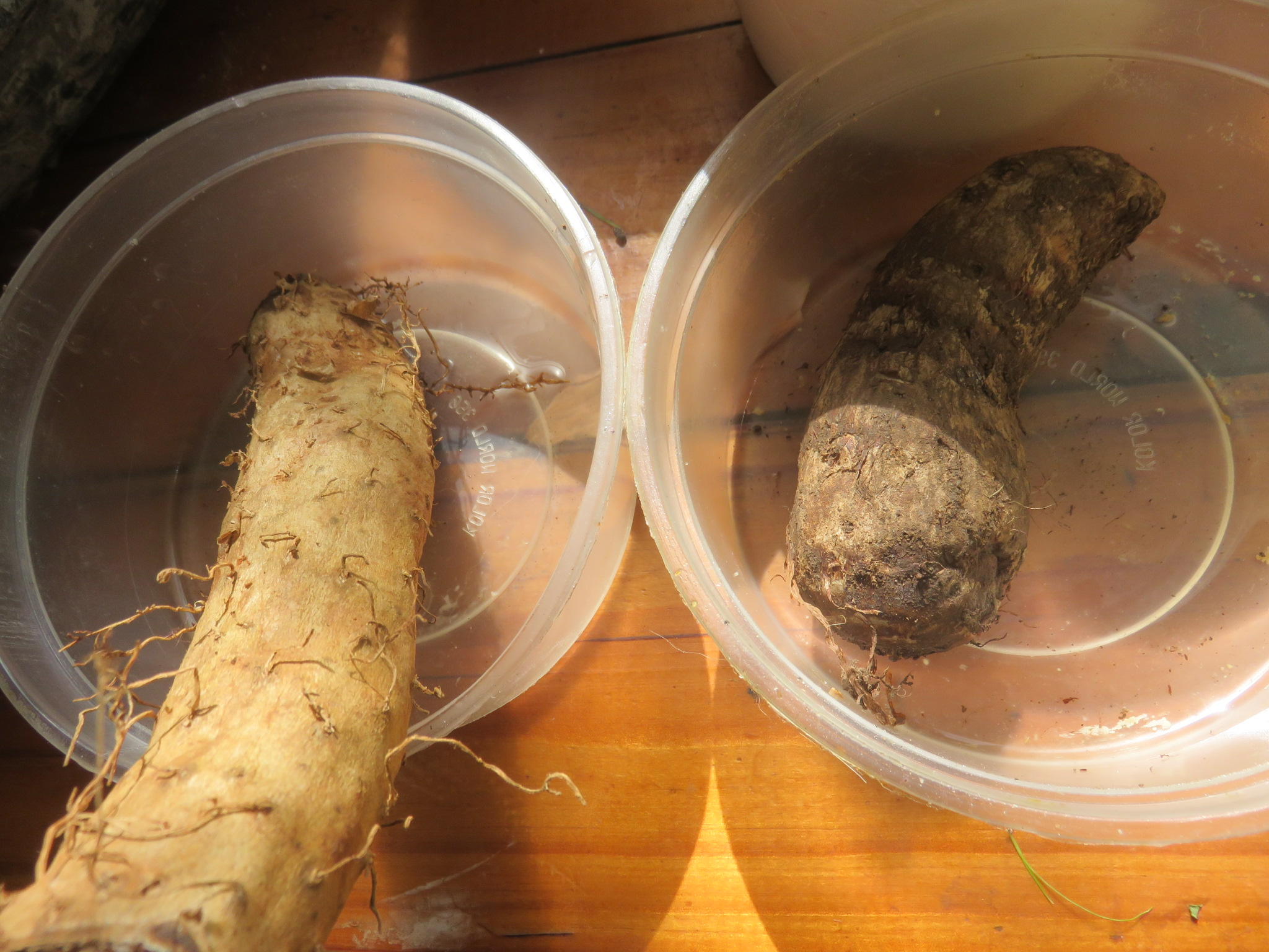Chinese yam and cocoyam