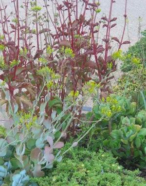 Drought tolerant plants often have CAM metabolism