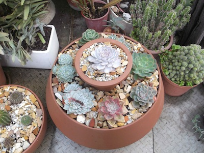 Garden pots enable proximity of like plants, for this variation on a theme design