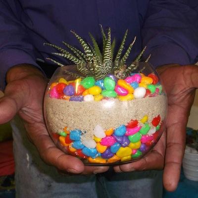 Fauve colour in glass pots