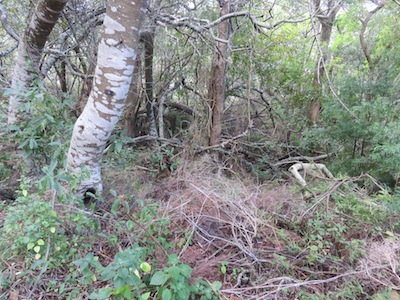 A self sustaining forest has plenty of dead wood