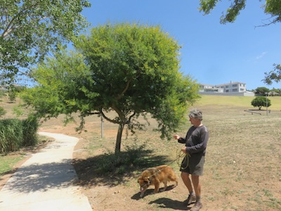 A huge park in Durbanville, with some trees and a lake and 95% dead grass and hardpan clay ground.