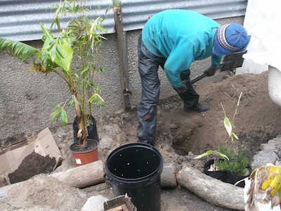 building elegant grey water systems: the drilled bucket will be planted in the hole filled with sawdust and surrounded by water lovers:banana, bamboo, and Elegia capensis