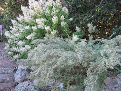 water-wise indigenous planting in shades of grey and white