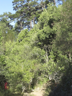 this too is a herb garden: of medicinal trees
