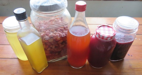 fruit vinegars at various stages