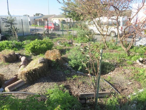 an overview of the urban gardening project in Langa