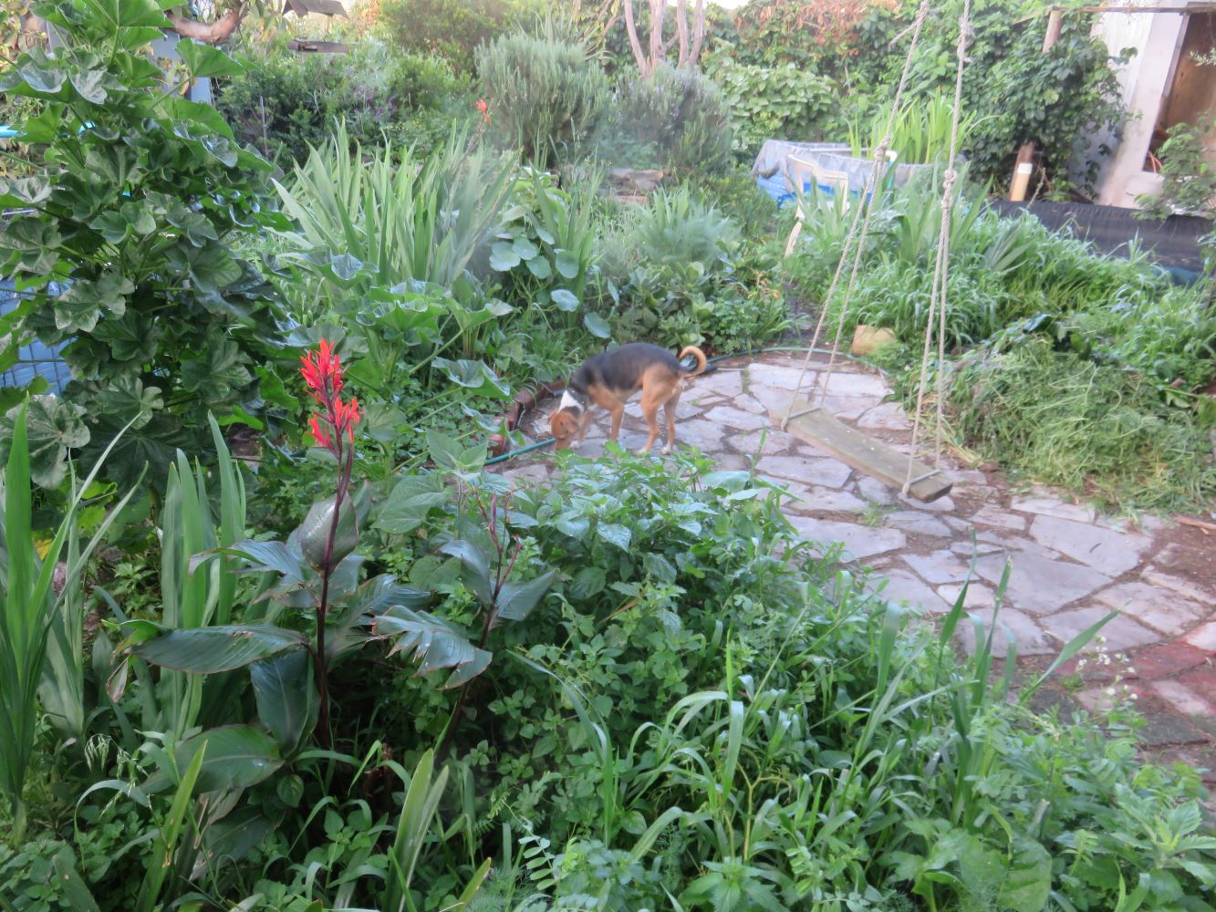 garden 8 months into soil regeneration