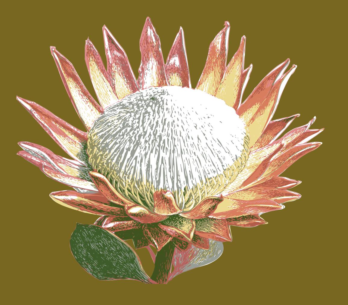 Digitized four color screen print design