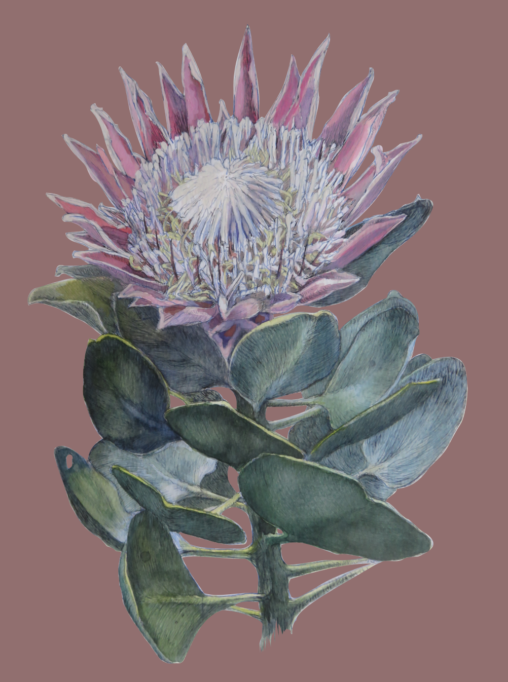 Protea cynaroides painting also available on decor items, accessories and clothing.