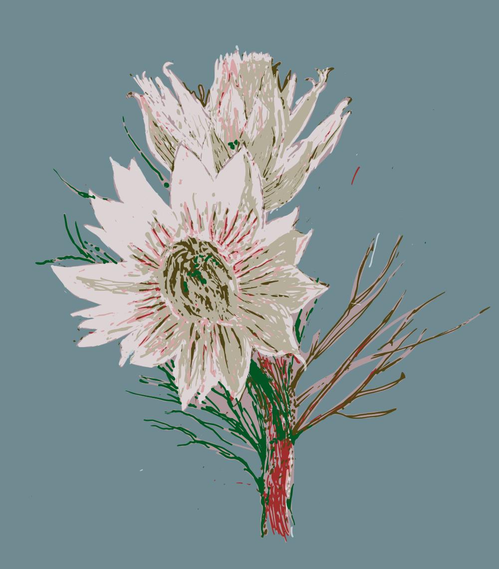our Serruria florida design