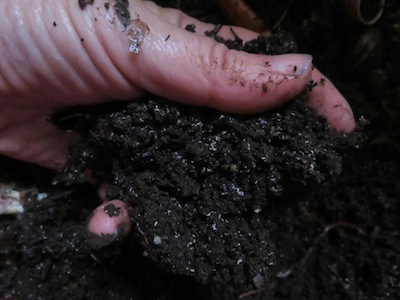 vermicompost is like chocolate for plants