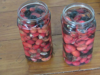 Don't use rotten fruit for vinegar, but save the seed.