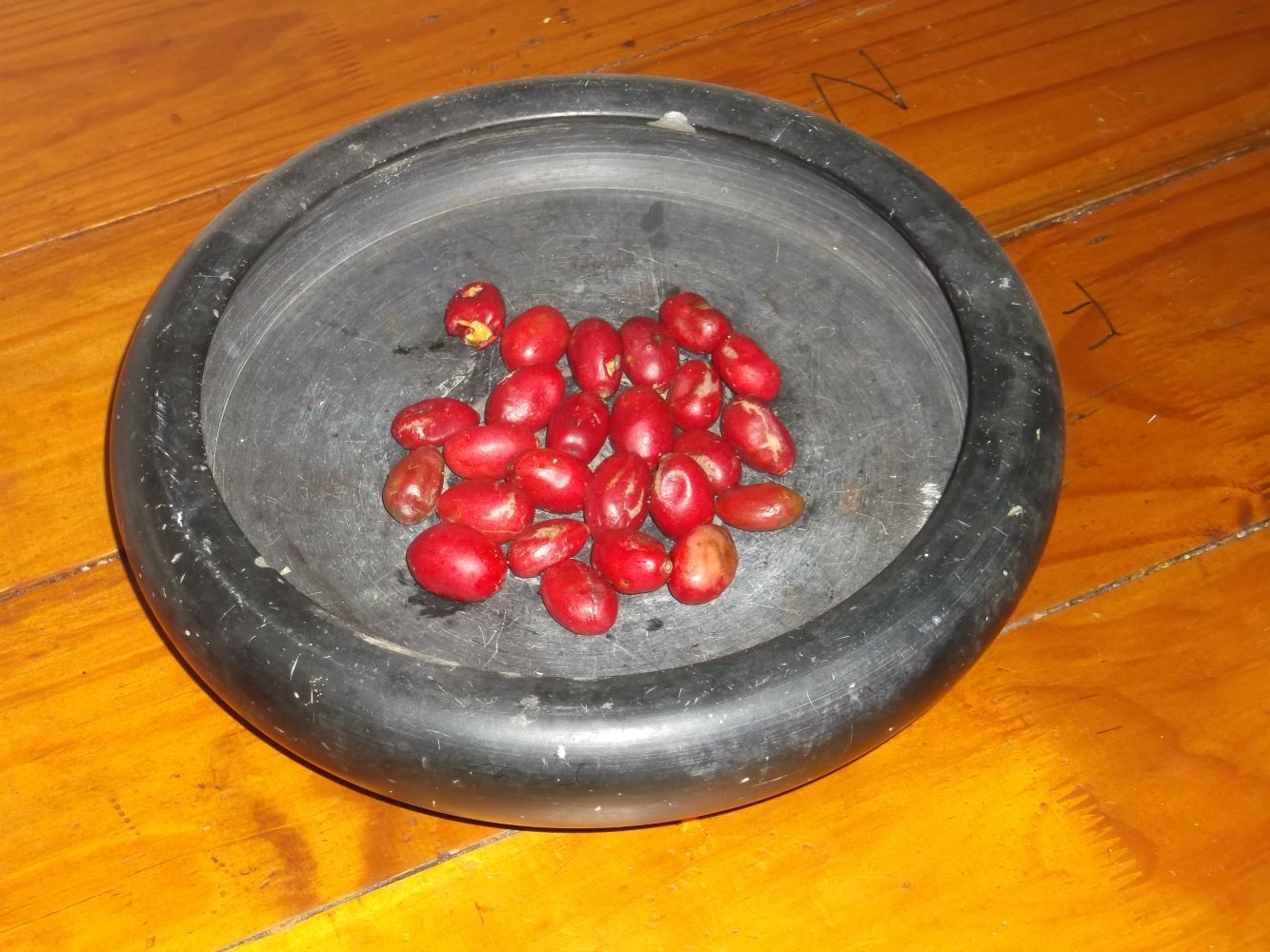 The fruit of the Umgwenyobomvu are incredibly red
