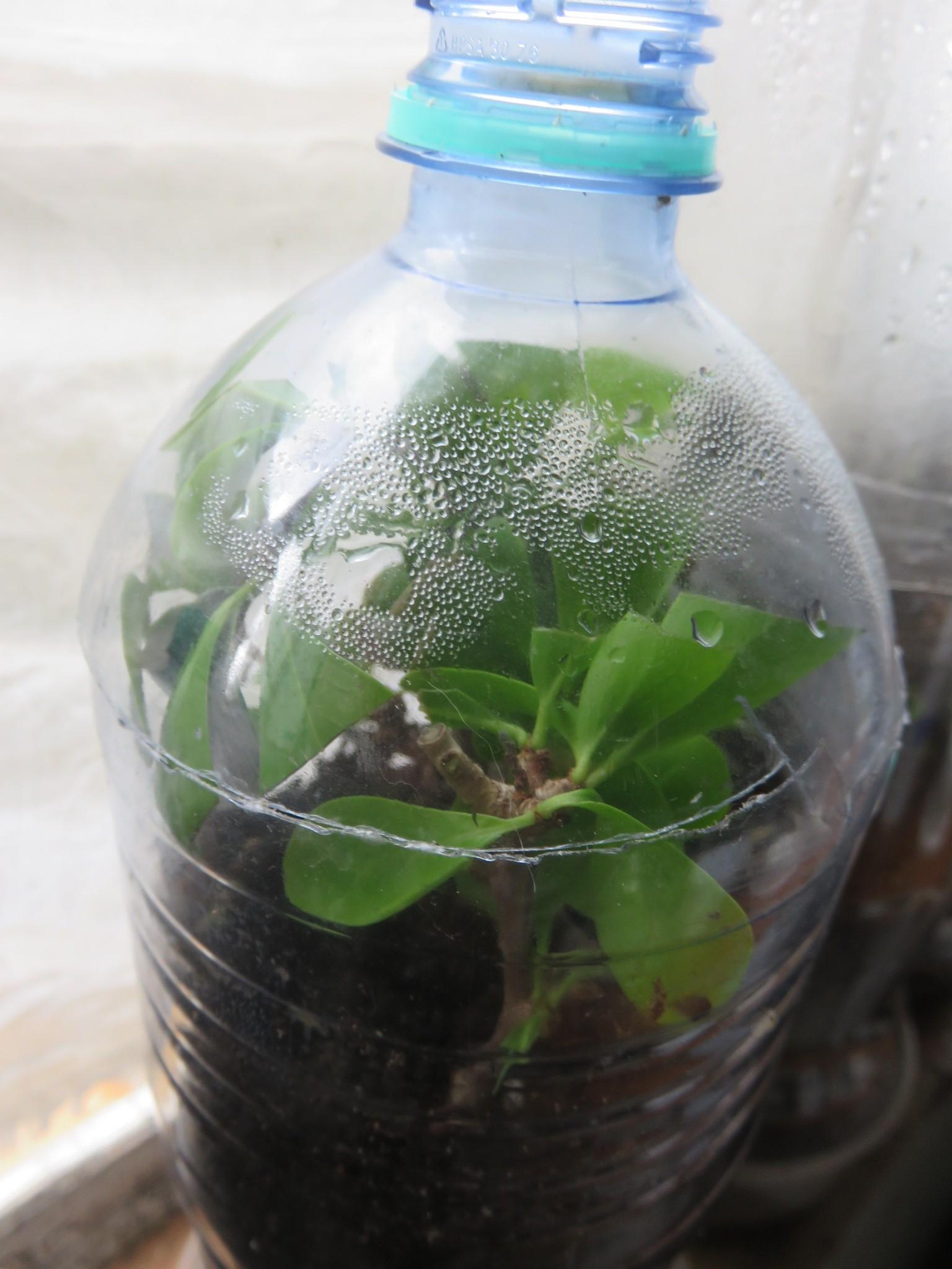 Trying to propagate cuttings in a mini terrarium