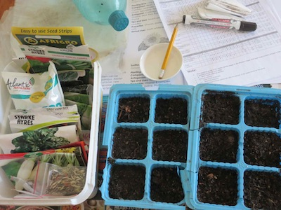seed trays, seeds, sowing calendars, pencil, delicate sprinkler