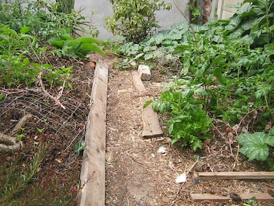 under layer of cardboard, mulch on beds and paths, and you need less water and weeding and food plants thrive