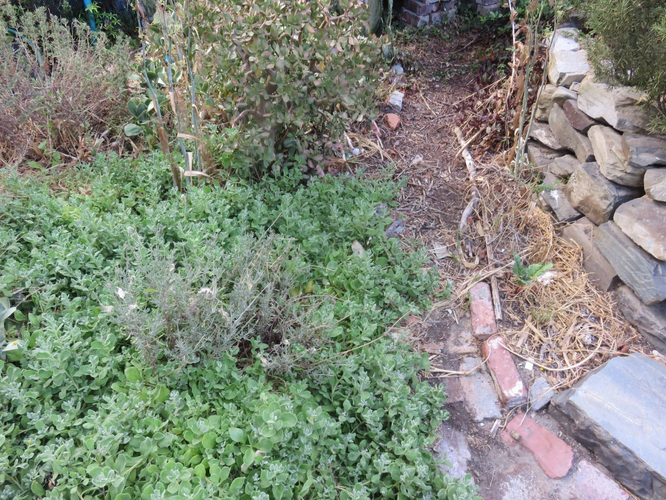 And below the wall, in the water catching hollow of the garden, I planted hardy native plants instead of the more tender European ones.