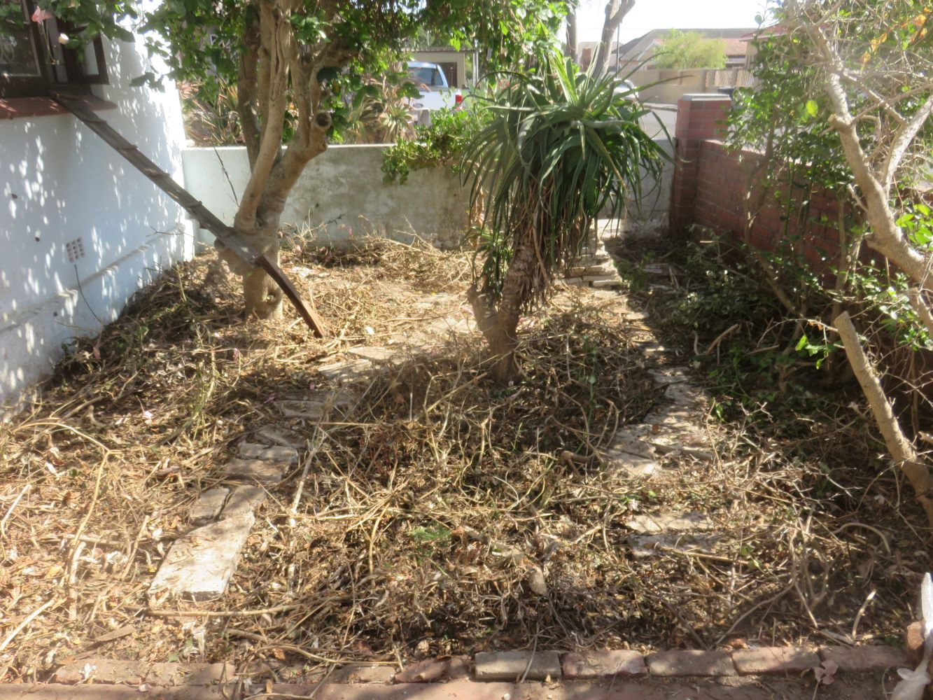 On the way to healthy soil I hope. The front garden after sowing cover crops, mulching and covering with sticks to stop birds and cats scratching out the seeds.