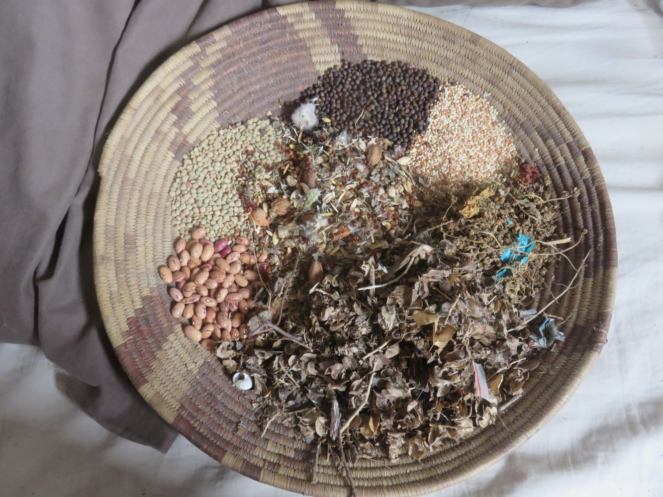 The forty species seed mix is taken from the grocery cupboard, cheap bird seed mixes, garden weeds and native plants growing in the wild. C4 grasses, chenopods and legumes form the backbone.