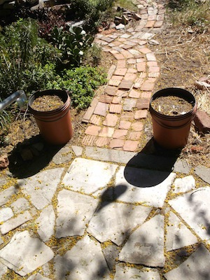 finished path from concrete circle to veggie garden