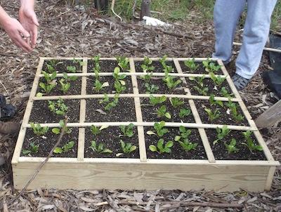 a container vegetable garden allows farming in the city