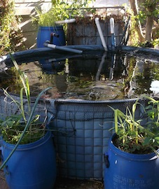 He ntegrated plants, biofiltration and fish in the top pond