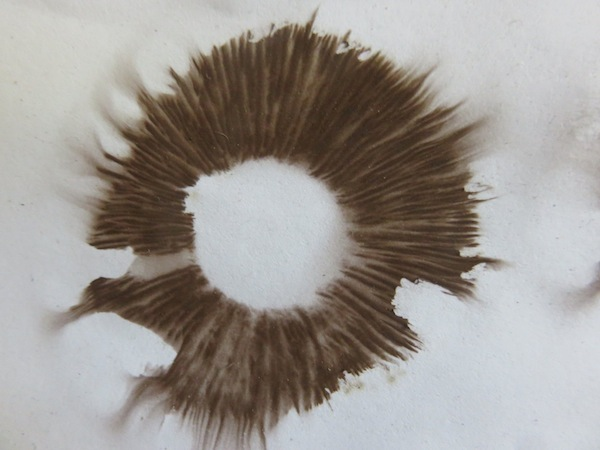 place mushroom gills down on paper to get spore print