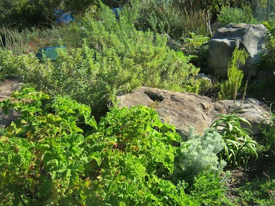 typical vegetation pattern in  Mediterranean gardening