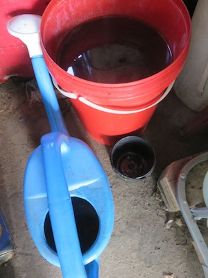 mature urine added to compost