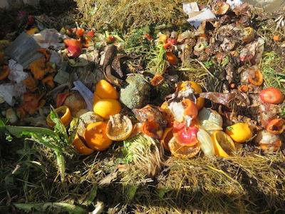 slimy kitchen waste is great compost