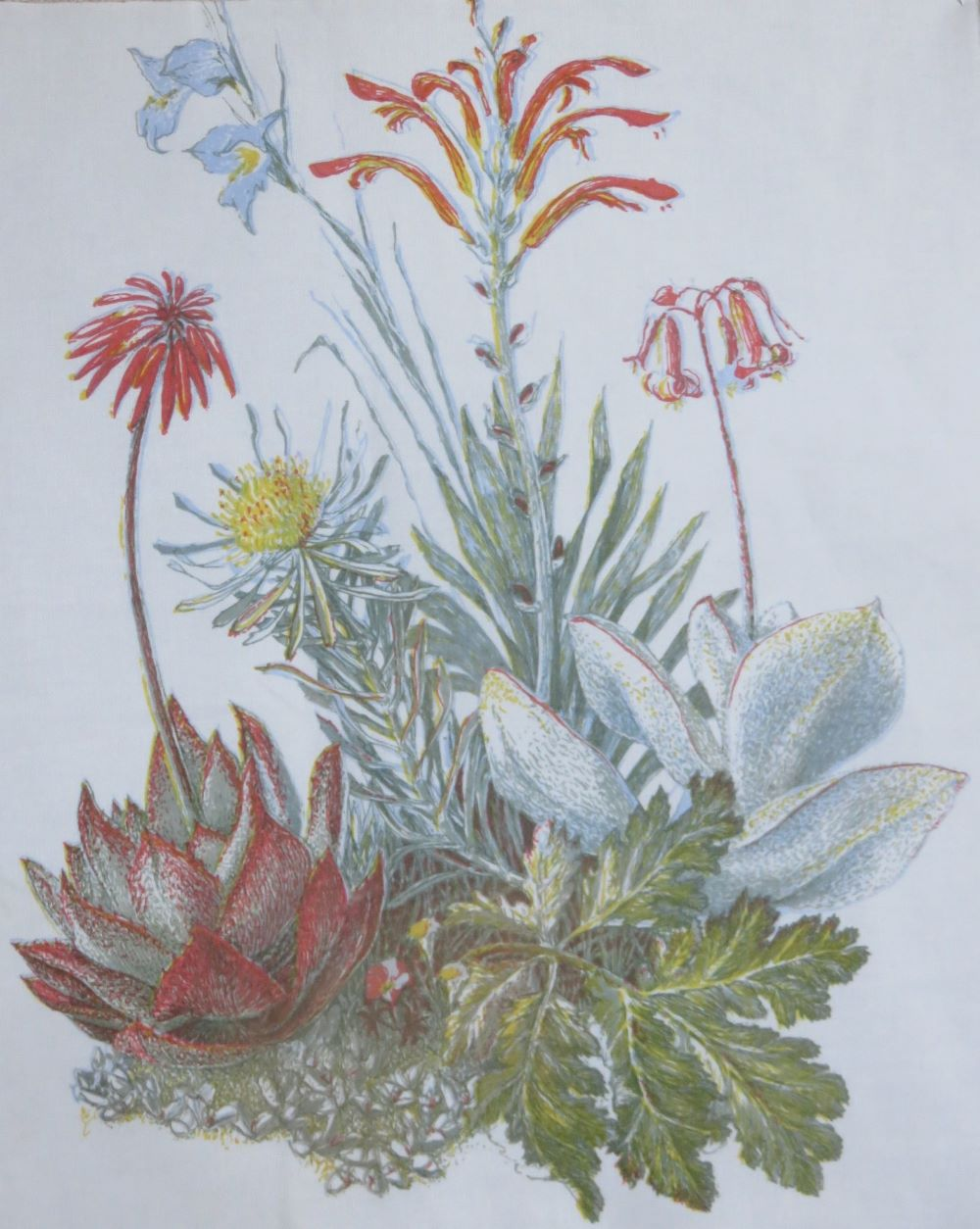 A selection of vegetation that grows on granite in the Renosterveld. A five color print.