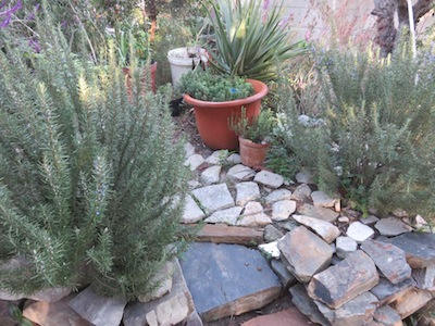 around the rosemary is a paving of broken concrete