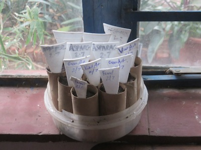 a mini windowsill tube system for seed propagation