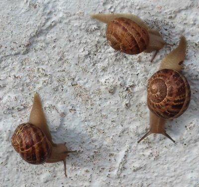 snails close up