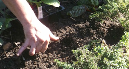 Planting Vegetable Gardens According To Permaculture Principles