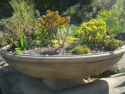 a selection of drought tolerant plants at Kirstenbosch