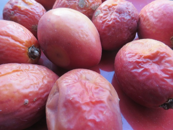 Over ripe tamarillos. Scoop out the seeds and ferment.