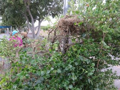 wild berries, thorns and birds