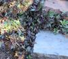 use steps to change levels rather than paved slopes. It saves soil and water and plants love to grow around them
