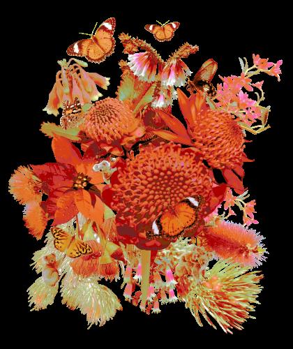 Australian Christmas flowers in fire colours.